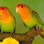sonhar com passarinhos