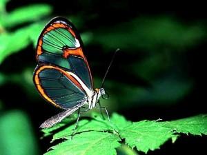 As borboletas são insetos de beleza singular.