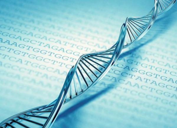 O Exame de DNA pode ser emitido através da Defensoria Pública da sua cidade