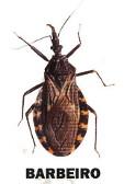 Barbeiro da Doença de Chagas sitomas e tratamento