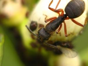 Tipos de insetos