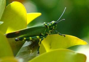 Espécies de inseto