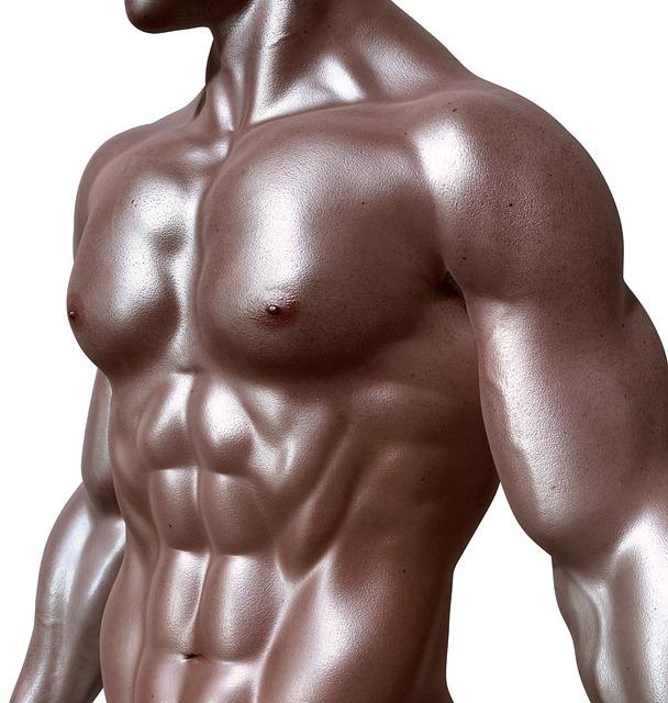 Os músculos são protetores do esqueleto.