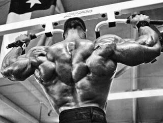 Musculos grandes