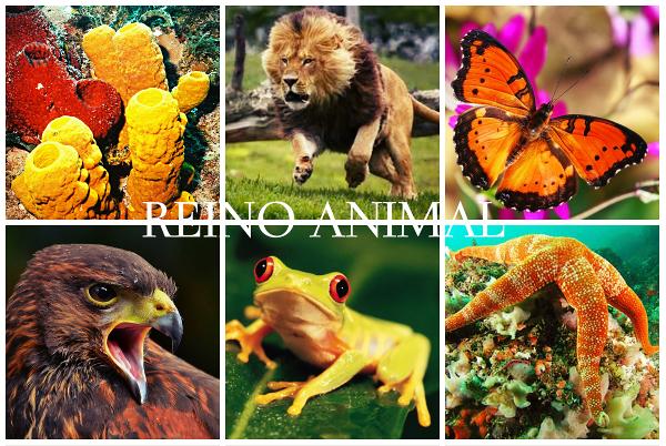 São feitas de modo distinto a classificação e divisão dos grupos de animais, veja