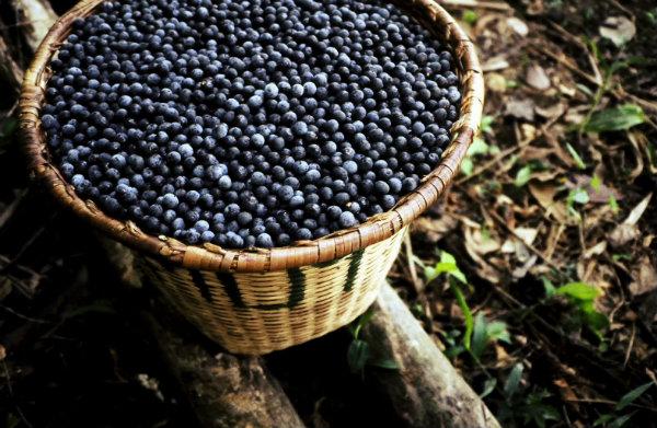 Fruta típica do norte brasileiro.