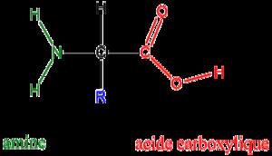 Cadeia de aminoácido