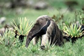 Animais do Cerrado em Extinção