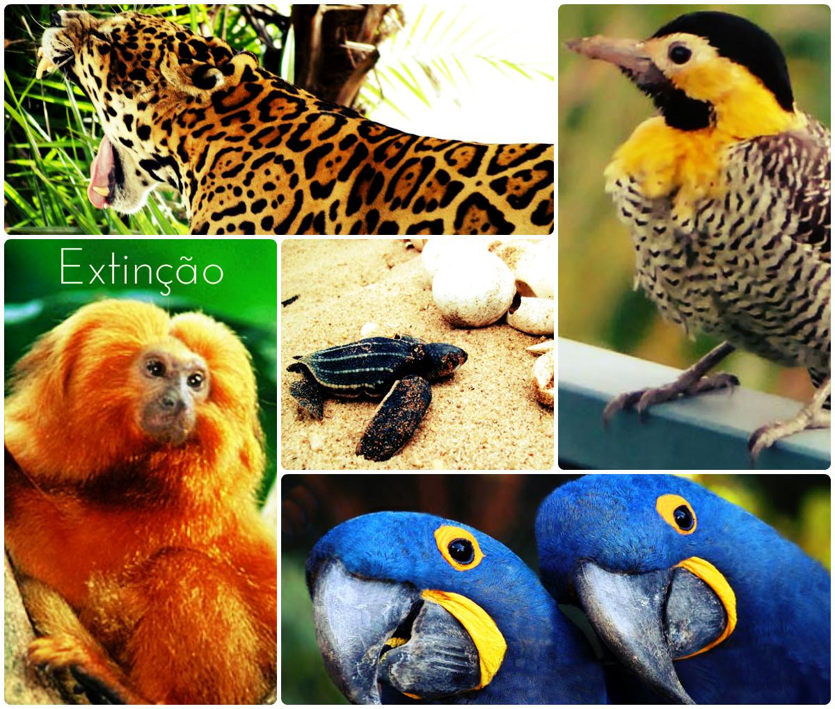Os animais em extinção necessitam de atenção especial.