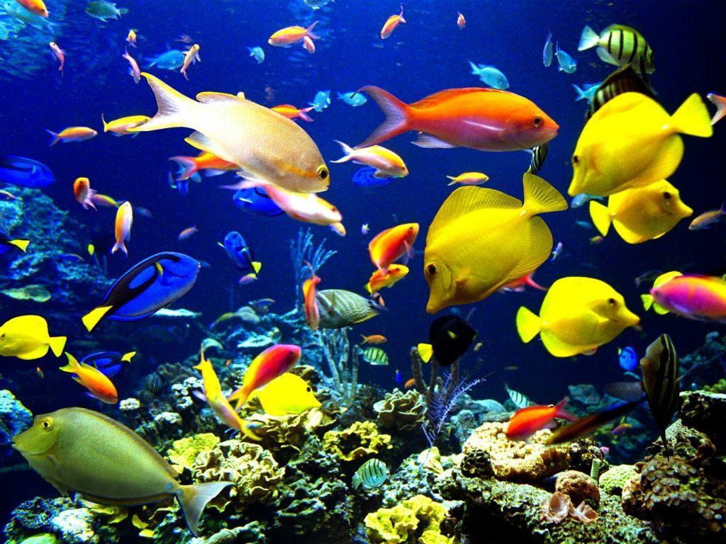 Para a montagem de um aquário, você precisa ter alguns cuidados, confira no artigo
