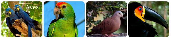 Aves são todos aqueles animais que possuem o corpo todo cobertos por penas