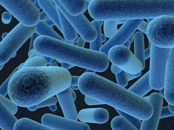Bactérias - Reino Monera