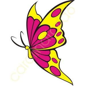 borboleta grande
