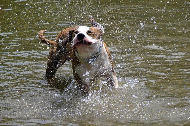 Cão tomando banho de rio.