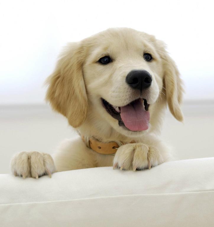 Os cachorros são totalmente dependentes de seus donos, é muito importante que esse fique atento aos sinais que eles dão para impedir doenças como a hemorroidas