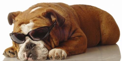 cegueira canina sintomas e tratamentos