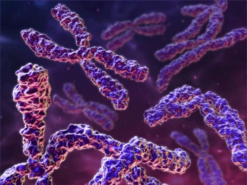 Os cromossomos são responsáveis pela formação dos genes