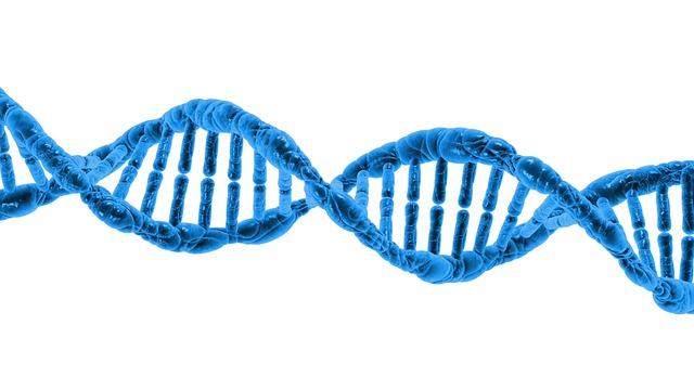 Os cromossomos são densos emaranhados de DNA (foto: reprodução)