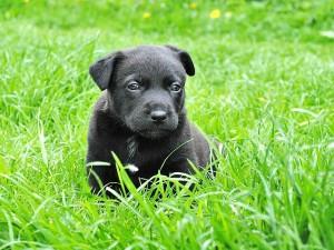 Distúrbios físicos em cachorros filhotes.