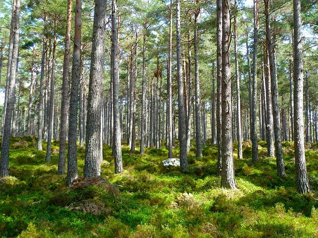 A FSC protege as florestas.
