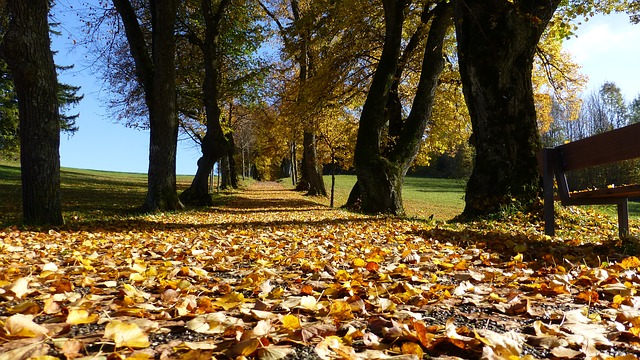 O inverno congela o solo e o outono então seca as folhas.
