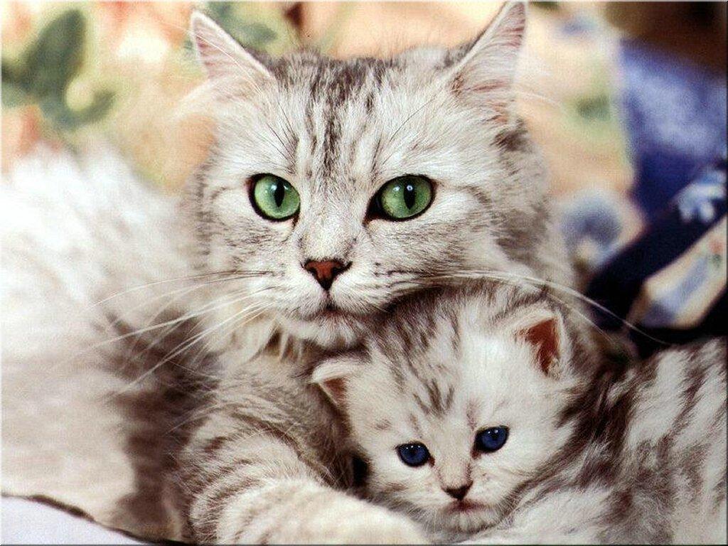 É muito interessante optar pelo procedimento de castração, isso protegerá seu animal de doenças e o manterá seguro