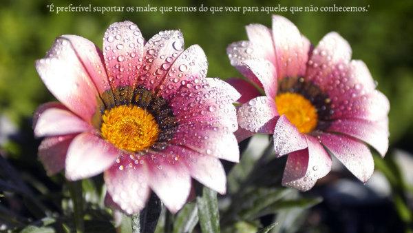 imagem linda 1
