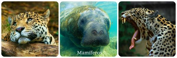 Os mamíferos são todos aqueles animais que possuem pai/mãe e esses se reproduzem assexuadamente