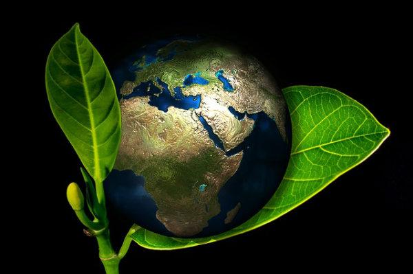 O meio ambiente precisa ser preservado.