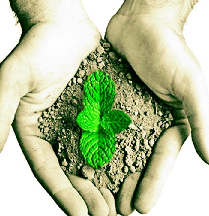 As unidades de preservação ambiental são extremamente importantes para manter a natureza viva