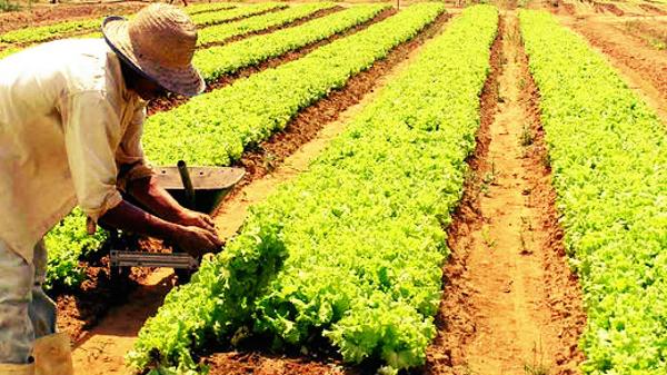 O financimento do BB é um motivador aos produtores rurais
