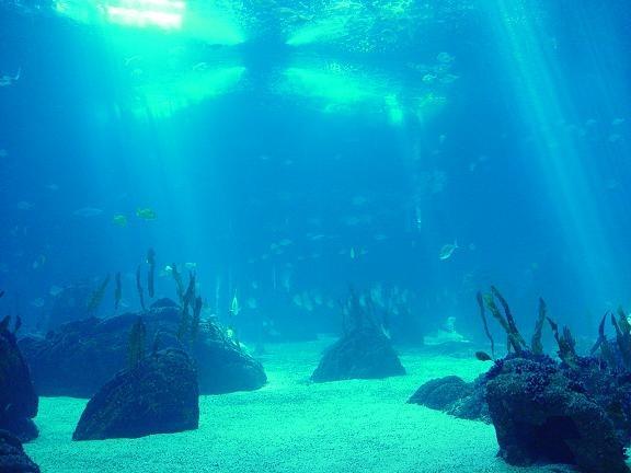 O ponto mais fundo do Oceano se chama a Fossa das Marianas e fica a 11.500 metros do nível do mar