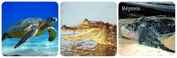 Répteis são animais vertebrados que geralmente possuem escamas em seu corpo