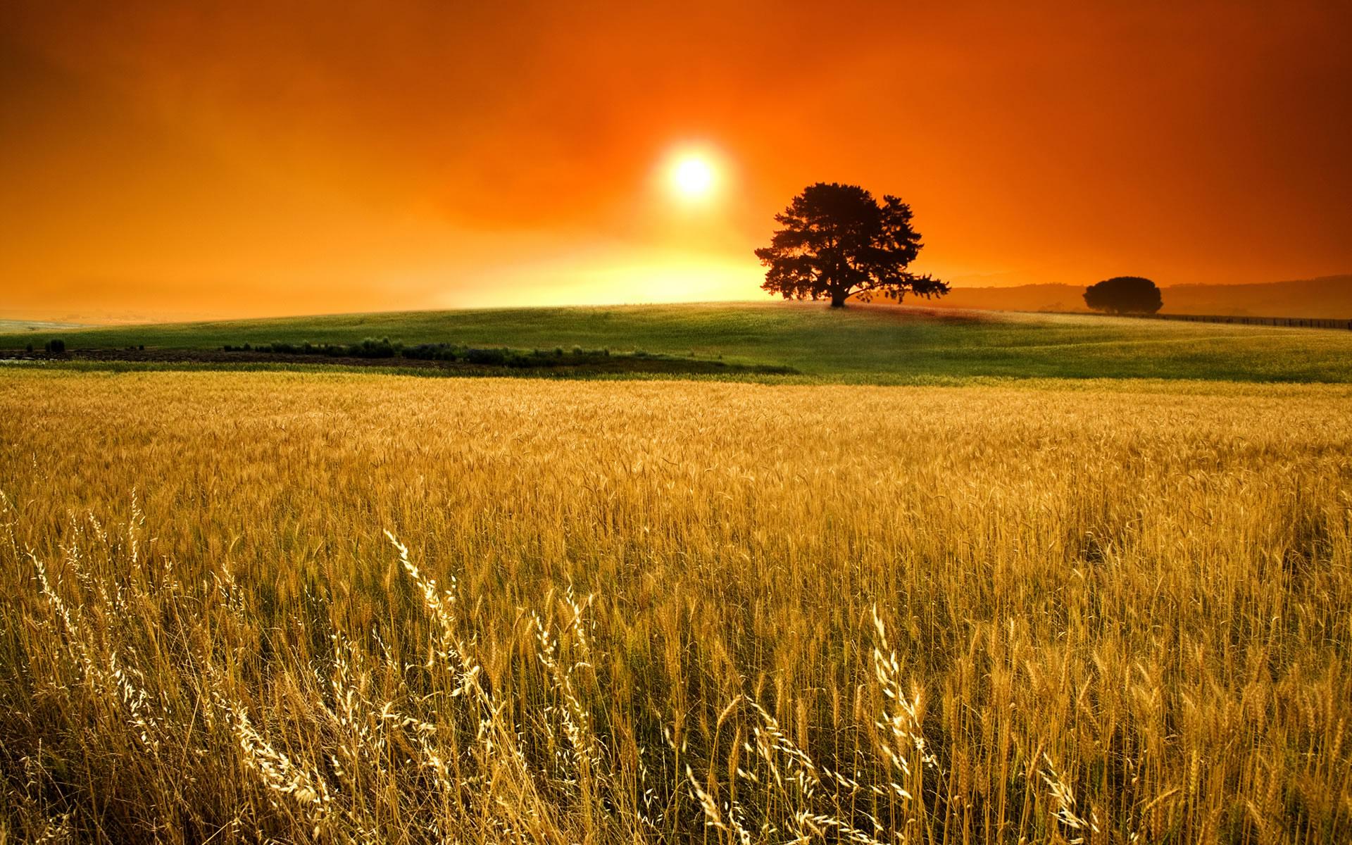 O Sol é a principal fonte emissora de energia