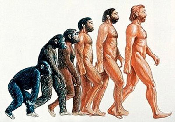 As etapas da evolução ocorreram ao longo dos anos