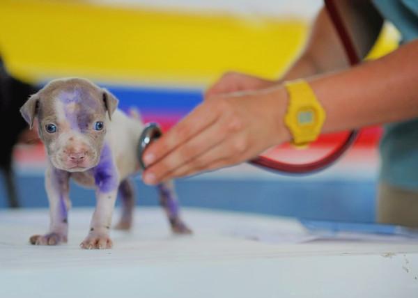 Os veterinários são extremamente importantes no cuidado com os animais.